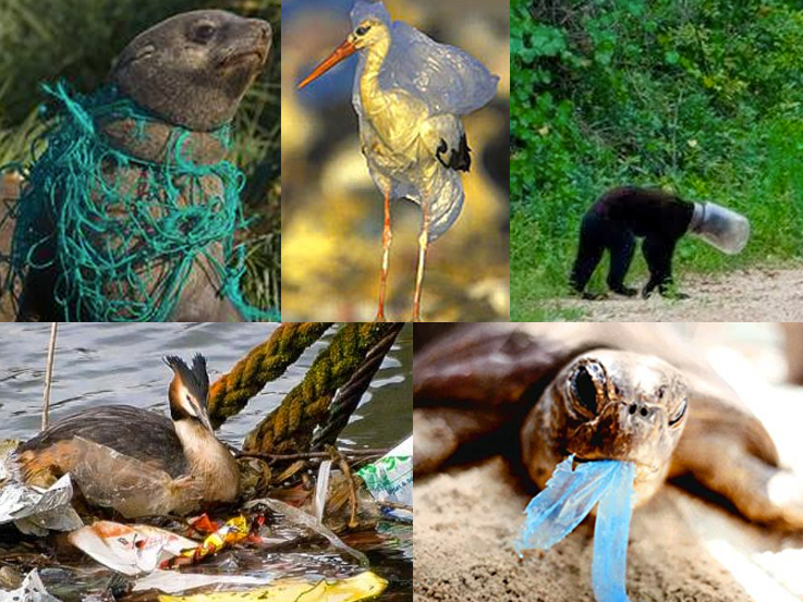 human effect on wildlife As the human population grows and the rich countries continue to consume  resources  diversity — but all are critically threatened by the effects of human  population  the us fish and wildlife service proposed to designate 7,015  acres as.
